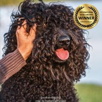 Het Barbetboek Winner